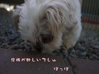 2012-8みんな103