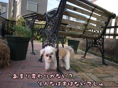 2012-8みんな105