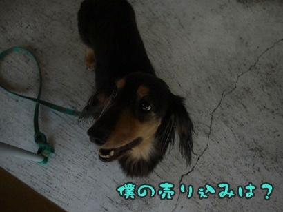2012-8-26うめ006