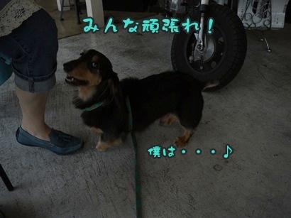 2012-8-26うめ005