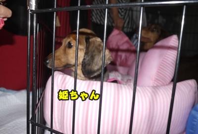 2012-8-26うめ正022
