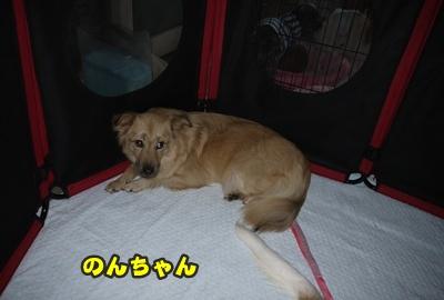 2012-8-26うめ正016