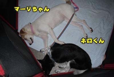 2012-8-26うめ正015