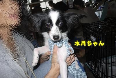 2012-8-26うめ正014