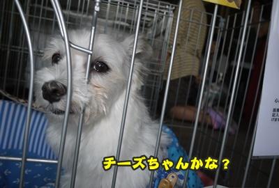 2012-8-26うめ正024