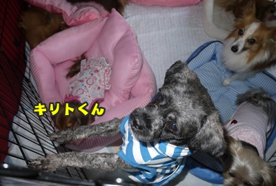 2012-8-26うめ正020