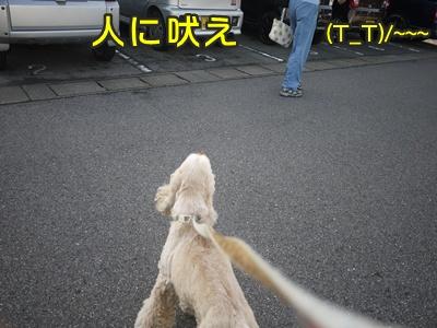 2012-8-23散歩051