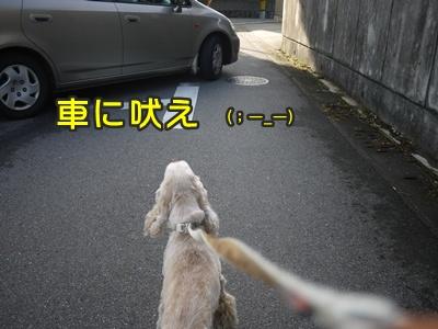2012-8-23散歩054