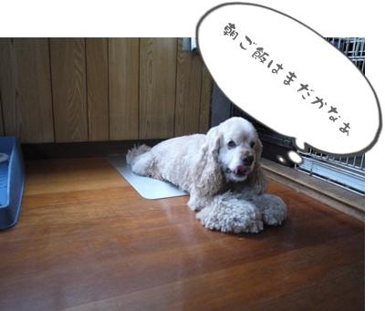 2012-8-23散歩058