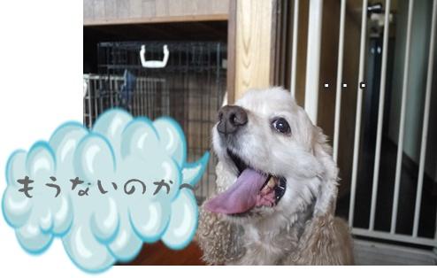 2012-8-23散歩066