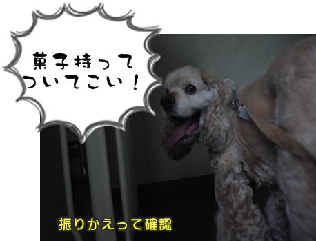 2012-8-23散歩056