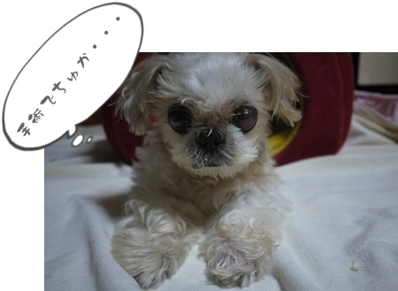 2012-9-13ちぃぽっぽ023