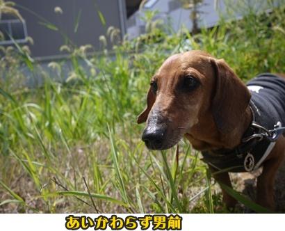 2012-8-26うめ002