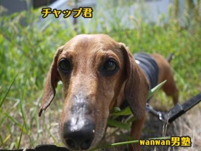 2012-8-26うめ001