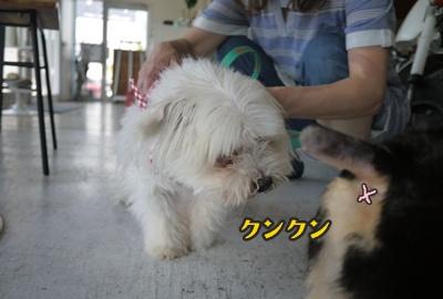 2012-8-26うめ正045