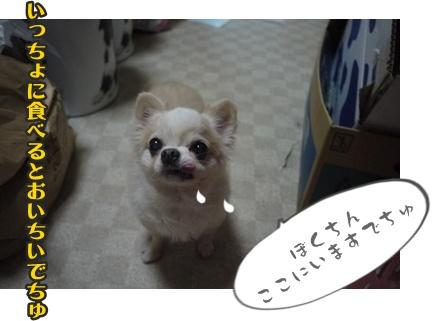 2012-9-13ちぃぽっぽ004
