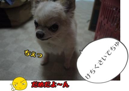 2012-9-13ちぃぽっぽ003