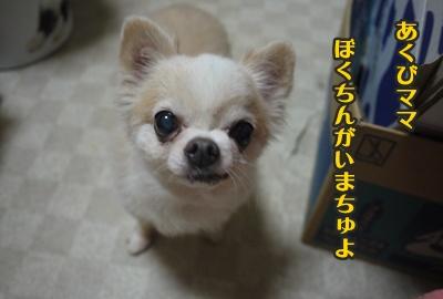2012-9-13ちぃぽっぽ001