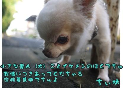 2012-8-23散歩045