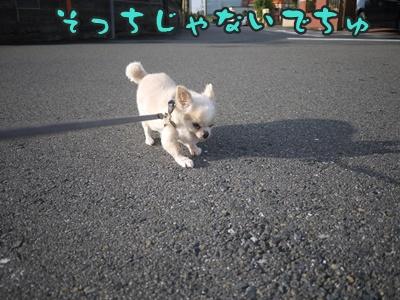 2012-8-23散歩038