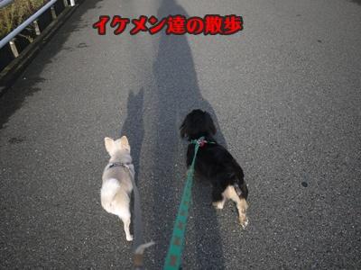 2012-8-23散歩035