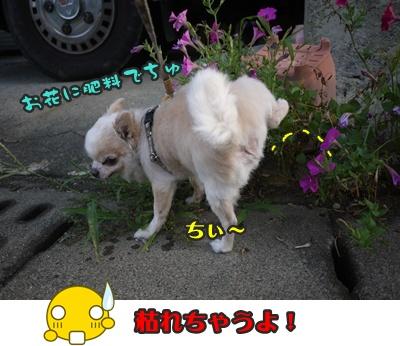 2012-8-23散歩044