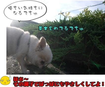 2012-8-23散歩041