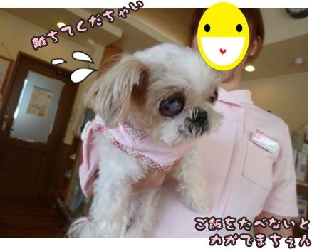 2012-9-25ぽっぽ手術031