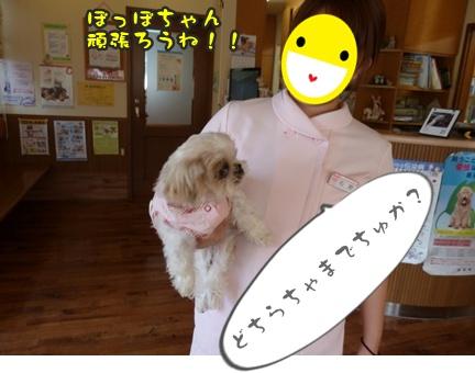 2012-9-25ぽっぽ手術030