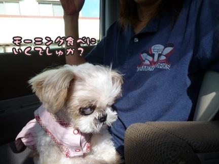 2012-9-25ぽっぽ手術027