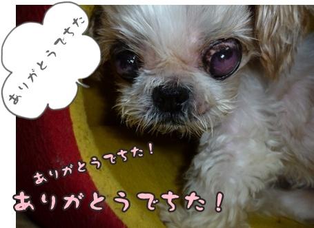 2012-9-26ぽっぽ術後007