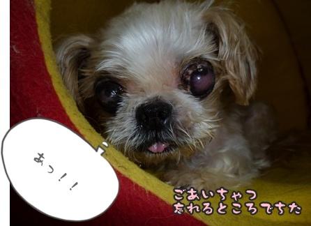 2012-9-26ぽっぽ術後005
