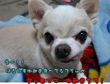 2012-9-28ちぃ坊004