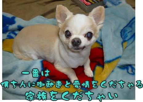 2012-9-28ちぃ坊003