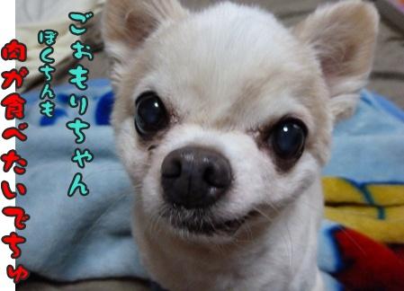 2012-9-28ちぃ坊005