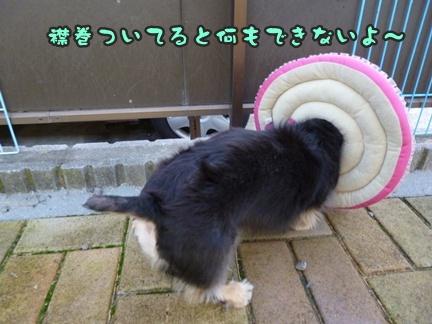 2012-9-25ぽっぽ手術002