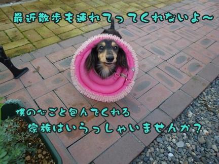 2012-9-25ぽっぽ手術017