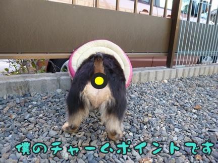 2012-9-25ぽっぽ手術010