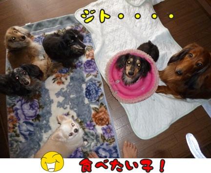 2012-9-24ぽっぽみんな039