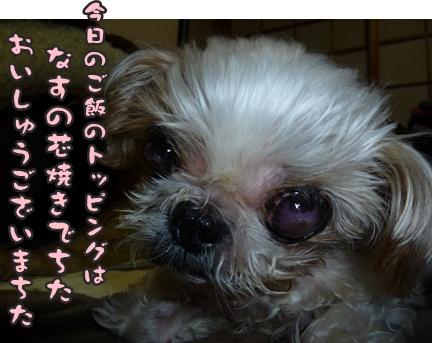 2012-10-6ぽっぽ抜糸008