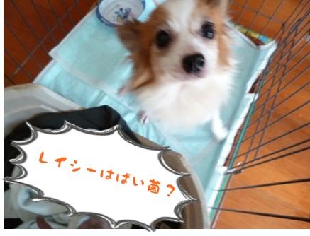 2012-10-20みんな037