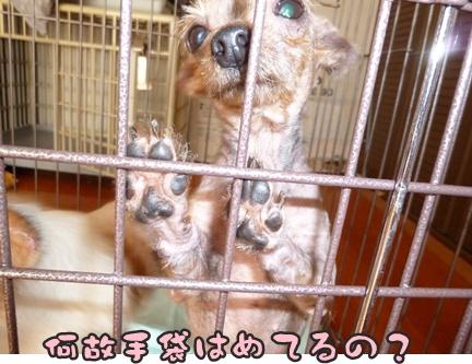 2012-10-20みんな031