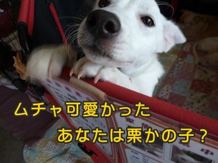 2012-10-20みんな064