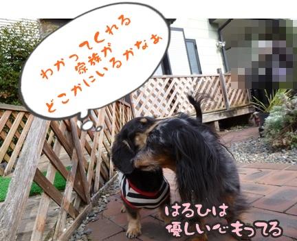 2012-11-10はると海074