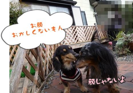 2012-11-10はると海075