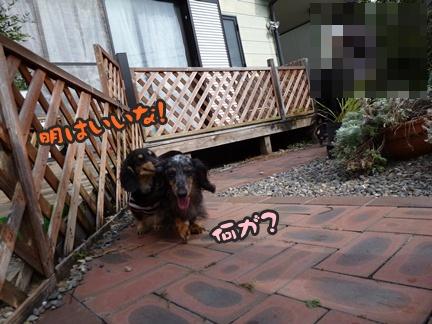 2012-11-10はると海073
