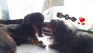2012-11-10仲良しDSC_0202