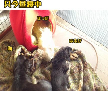 2012-11-21昼寝DSC_0203