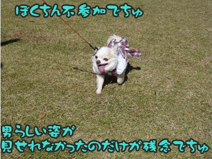 2012-11-10ちぃ坊1090