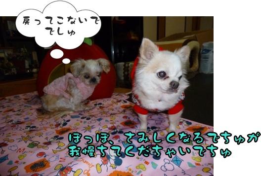 2012-12-1ちぃ坊笑美023